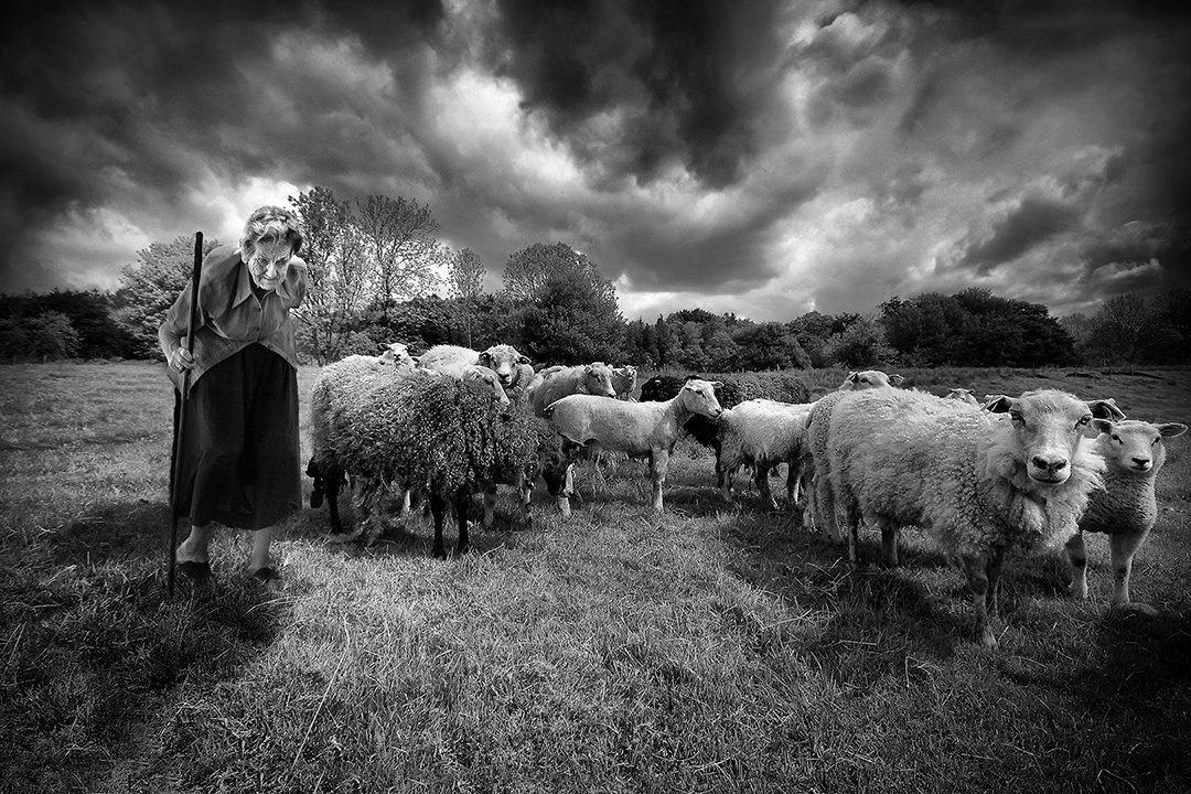 Sheep_guardianBW